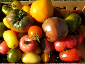 Hierloom tomatoes grown by Purple Onion Cuisine